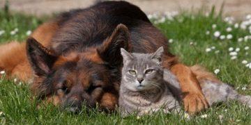 2e4beed12d3100d3d2222d7c1a30e1ae 360x180 - Чем опасна весна для собак и кошек