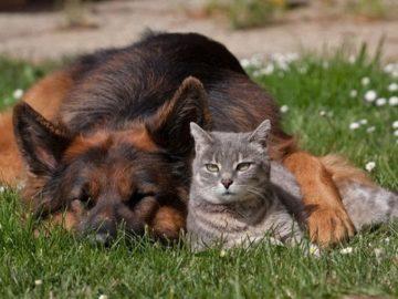 2e4beed12d3100d3d2222d7c1a30e1ae 360x270 - Чем опасна весна для собак и кошек