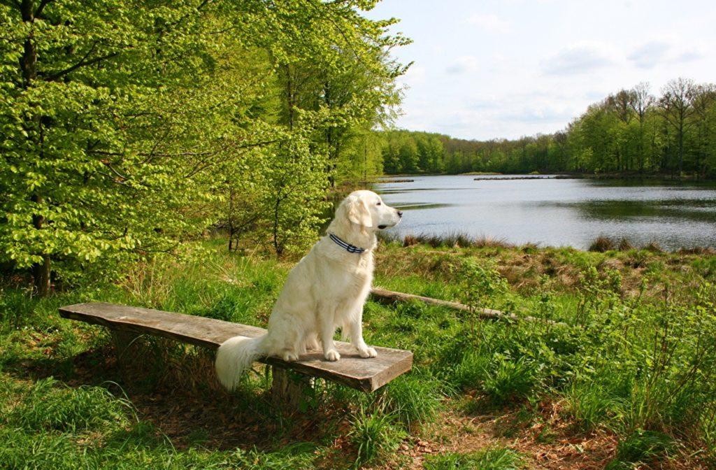 369529 svetik 1024x672 - Чем опасна весна для собак и кошек
