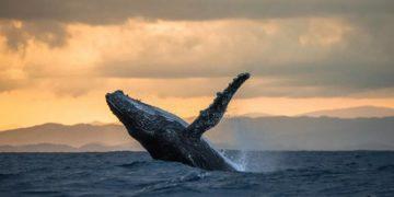 546е 360x180 - Зачем киты выпрыгивают из воды? Ученые нашли ответ