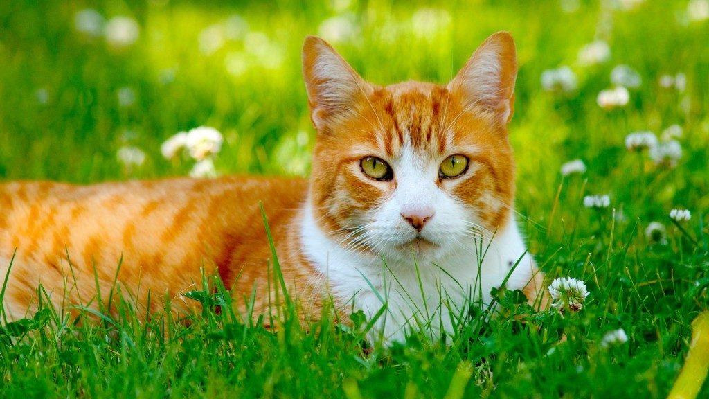 Cute Cat in Field 1024x576 1024x576 - Чем опасна весна для собак и кошек