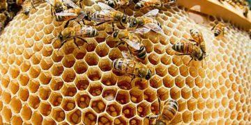 kakie veshhestva vydeljajut nasekomye animal reader. ru 005 360x180 - Какие вещества выделяют насекомые?