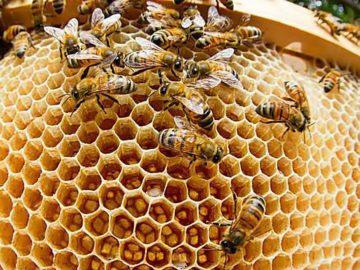 kakie veshhestva vydeljajut nasekomye animal reader. ru 005 360x270 - Какие вещества выделяют насекомые?