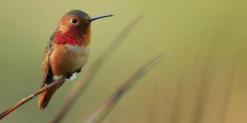 kolibri foto 360x180 - ТОП-10. Самых маленьких птиц в мире