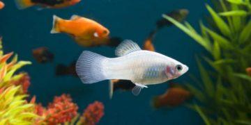 prisposoblenija pozvoljajushhie rybam animal reader. ru 008 768x536 360x180 - Приспособления, позволяющие рыбам расходовать меньше энергии при движении в воде