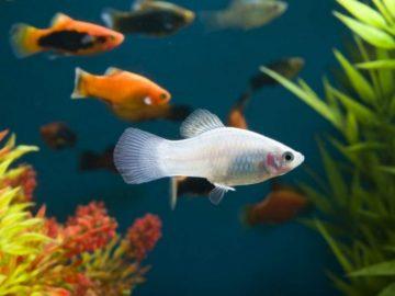 prisposoblenija pozvoljajushhie rybam animal reader. ru 008 768x536 360x270 - Приспособления, позволяющие рыбам расходовать меньше энергии при движении в воде