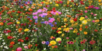 21164da77c53398e6d669981eacf10cc 360x180 - Интересные факты о цветах
