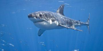 Sharks Underwater world 465073 1920x1200 360x180 - Интересные факты об акулах