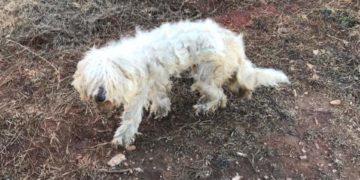 28276950 1662366510488887 2998653259286276261 n 360x180 - Эта собака была очень тощей и лохматой, но под грудой шерсти пряталась настоящая милашка