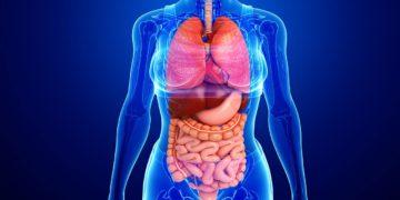 511913933560123092insan fiziologiyasi 360x180 - 25 интересных фактов об органах человека