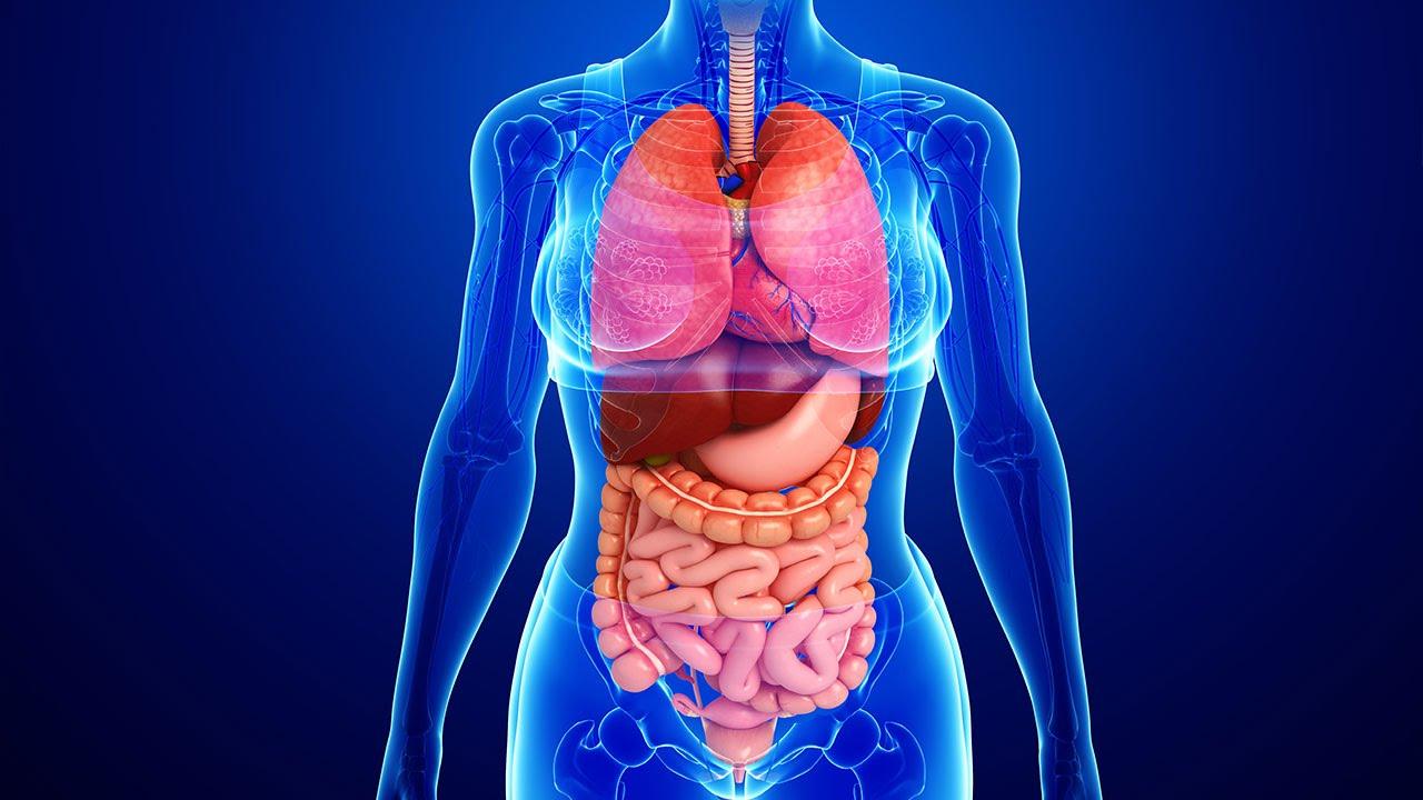 511913933560123092insan fiziologiyasi - 25 интересных фактов об органах человека