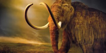 02de extinction1 jumbo 360x180 - 30 интересных фактов о мамонтах