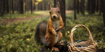 1411451992 544968 1920x1200 360x180 - 11 интересных фактов о лесных животных