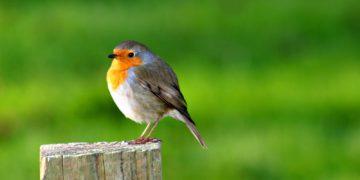 1514275076 4 360x180 - 26 интересных фактов о птицах