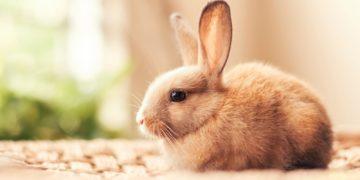 2017Animals   Hares and rabbits A small beautiful decorative rabbit 118857  360x180 - 16 интересных фактов о кроликах