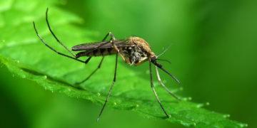 2706 360x180 - 28 интересных фактов о комарах