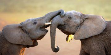 422828 sepik 3840x2400 360x180 - Самые лучшие матери животного мира