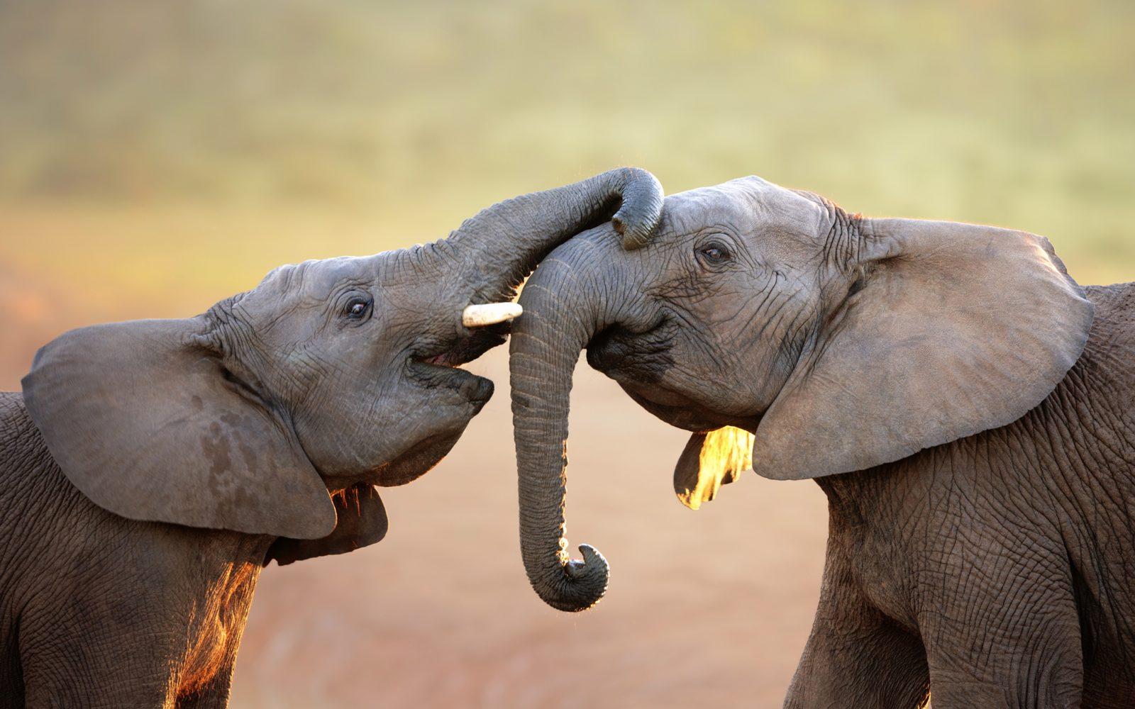 главная все самое интересное о животных с картинками представлены