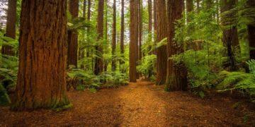 Forests Trees Trunk tree 464860 360x180 - 27 интересных фактов о лесах и деревьях