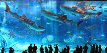 Japanese Aquarium 360x180 - 7 интересных фактов об аквариумах