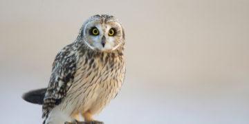 Owls Birds 439493 360x180 - 20 интересных фактов о совах