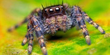 Spiders Closeup Eyes 507241 360x180 - 31 интересный факт о пауках