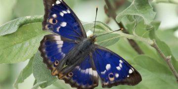 animals insects butterfly 62477 360x180 - 20 интересных фактов о бабочках