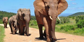 image 1 360x180 - 20 интересных фактов о слонах