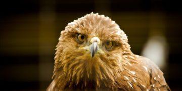 luxfon.com 20264 360x180 - 22 интересных факта об орлах