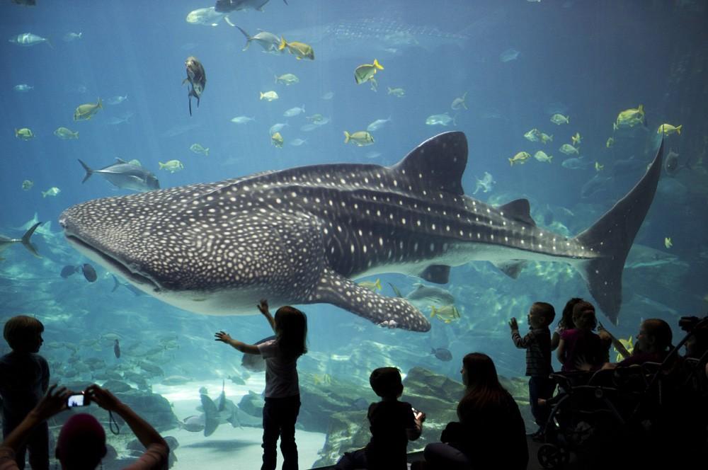 novyy okeanarium moskvy otkryvaetsya na vdnkh - 7 интересных фактов об аквариумах