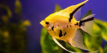 post 5cad90bb95fdb 360x180 - 29 интересных фактов о рыбах