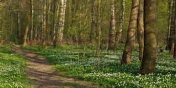 s1200 13 360x180 - Интересные факты о весне