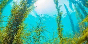 s1200 14 360x180 - 26 интересных фактов о водорослях