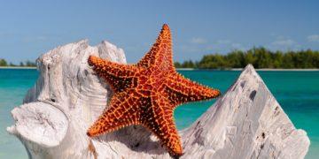 sea sand starfish invertebrate cuba cayolargo d300 echinoderm marine biology marine invertebrates 312656 360x180 - 20 интересных фактов о морских звёздах