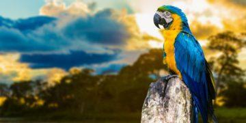 vetka 360x180 - 25 интересных фактов о попугаях