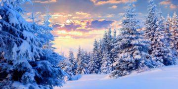 winter forest 19 12162408 360x180 - Интересные факты о зиме