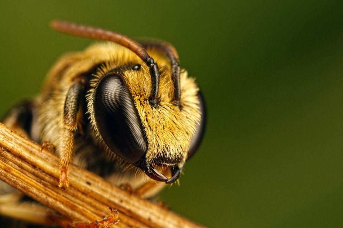 5f35d4ce674ec7bea2487c1fae2ba0a2 - 25 интересных фактов о пчёлах