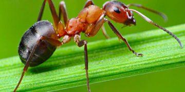 691 360x180 - 25 интересных фактов о муравьях