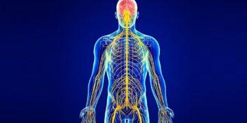 NervnayaSistema 360x180 - 17 интересных фактов о нервной системе человека