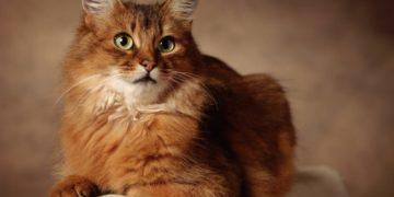 nastol.com .ua 15710 360x180 - 25 интересных фактов о кошках