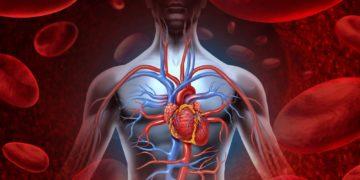 vascular health 360x180 - 25 интересных фактов о кровеносной системе