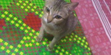 14 1229 696228087 360x180 - Котёнок разгрыз кабель от наушников, но принёс владельцу необычный подарок взамен