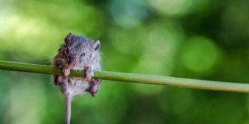 23 1446 1088773851 360x180 - Фотограф устроил фотосессию для мышонка, который был на волосок от смерти, но выжил