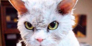 albert evil cat h 1 e1517172966281 360x180 - Альберт — самый злой котик