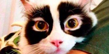 amazing coloring wool cats h 9 e1517172303263 360x180 - Коты с самой необычной раскраской шерсти