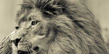 animal world sepia h 9 360x180 - Животный мир в режиме сепия