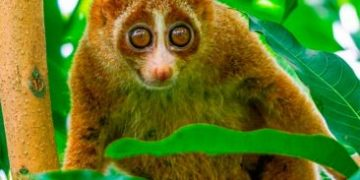 animals dangerous h 2 e1517173011481 360x180 - Милые животные, которые могут быть опасными
