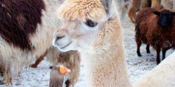 animals got shot h 21 e1517172116322 360x180 - Восхитительные животные, которые влезли в кадр