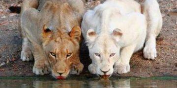 animals red book h 5 e1517172367299 360x180 - Самые редкие в мире животные