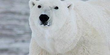biggest animals world h 23 360x180 - 25 самых больших животных в мире